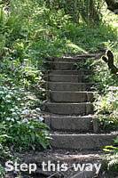 Steps leading up through Sloo Woods