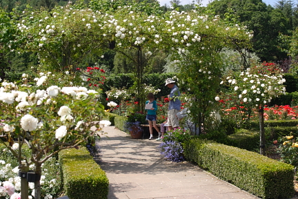 Rose Garden Rosemoor photo copyright Pat Adams