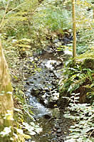 The stream which runs through the village which used to power the old corn mill